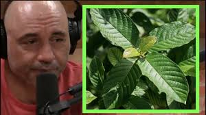 kratom joe rogan